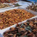 Insetti: da possibile cibo del futuro al rischio estinzione